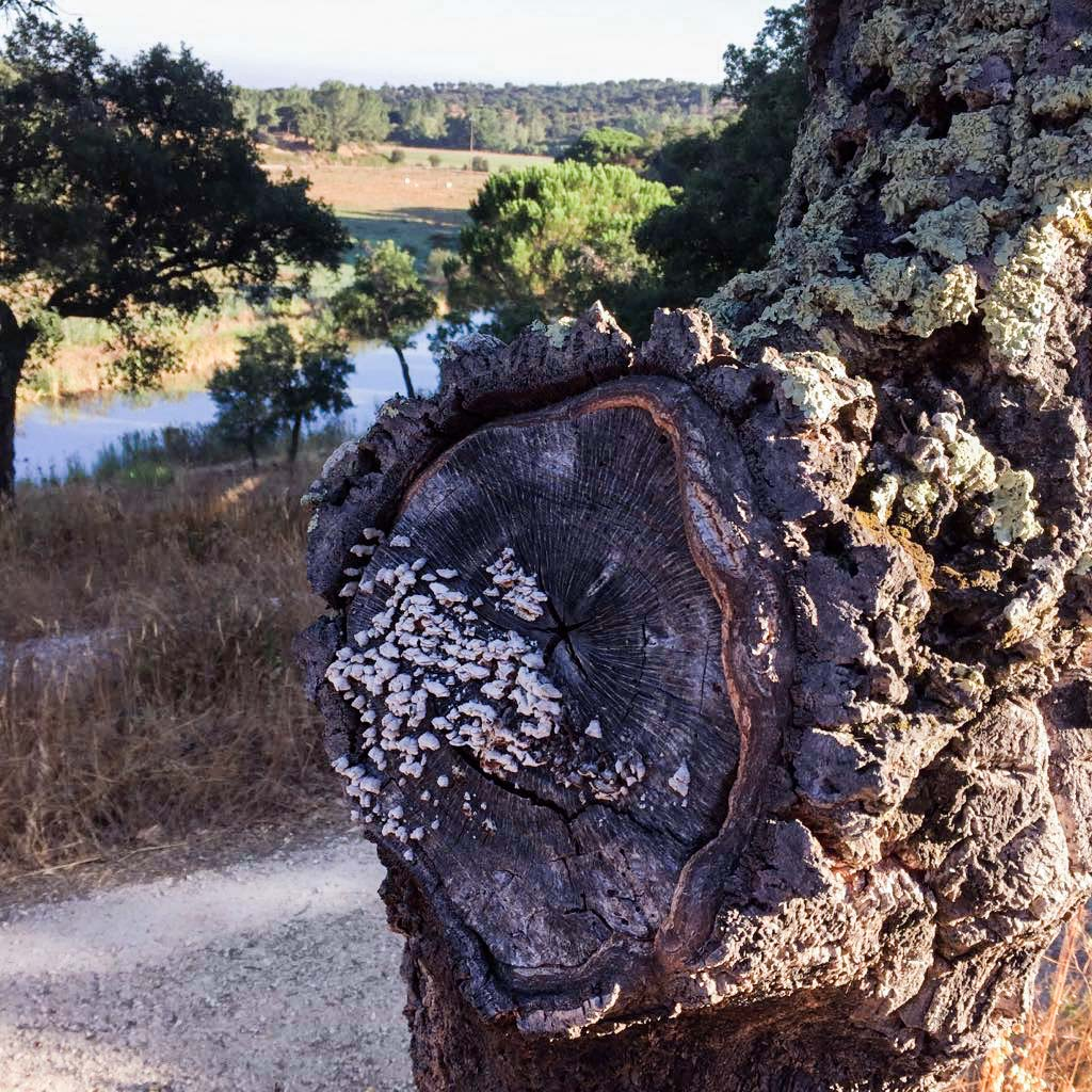herdade_do_moinho_novo_portugal-30